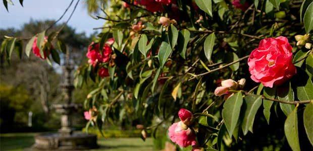 Los Jardines de los pazos de A Saleta y Quinteiro da Cruz ya son de Excelencia Internacional